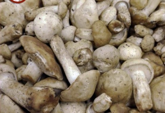 Blackthorn Mushroom: April taste! thumb