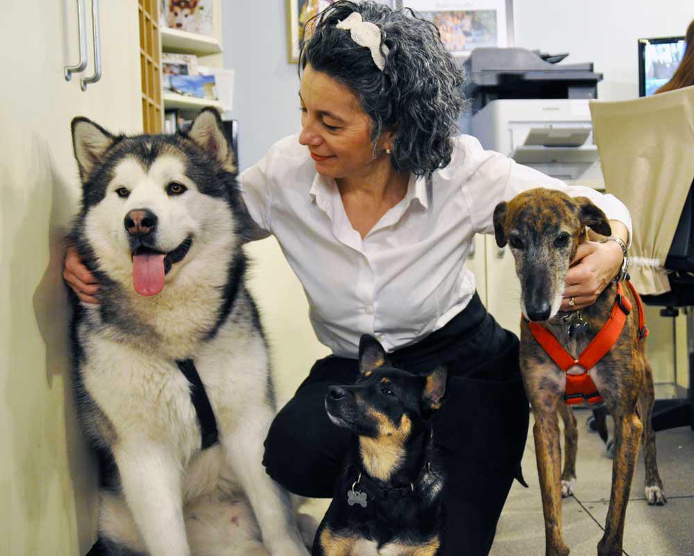 Pet Friendly Hotel Rimini: al Corallo i cani sono i benvenuti