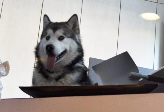 hotel cani rimini