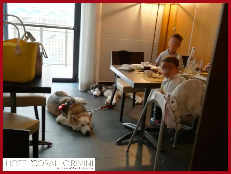 cani in sala da pranzo