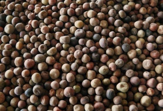 Roveja: antico legume nella crespella di Pasqua! thumb